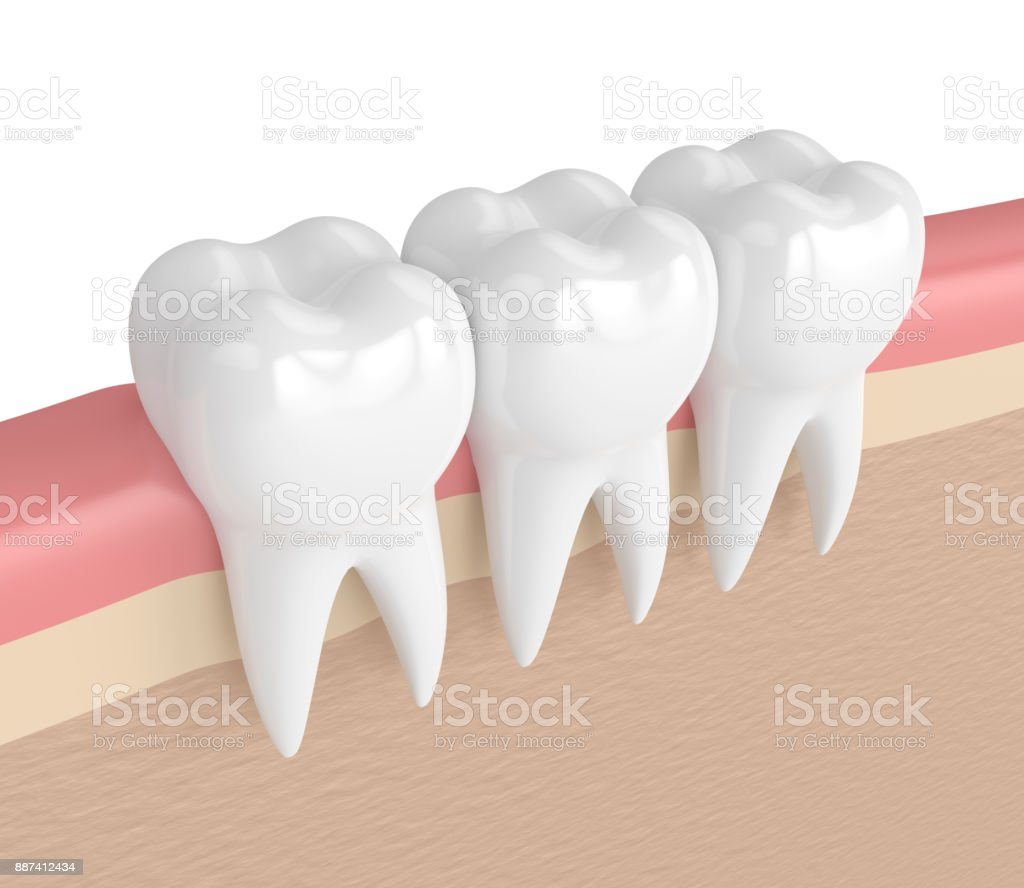 3d Render Of Teeth In Gums Stock Photo & More Pictures of Anatomy ...