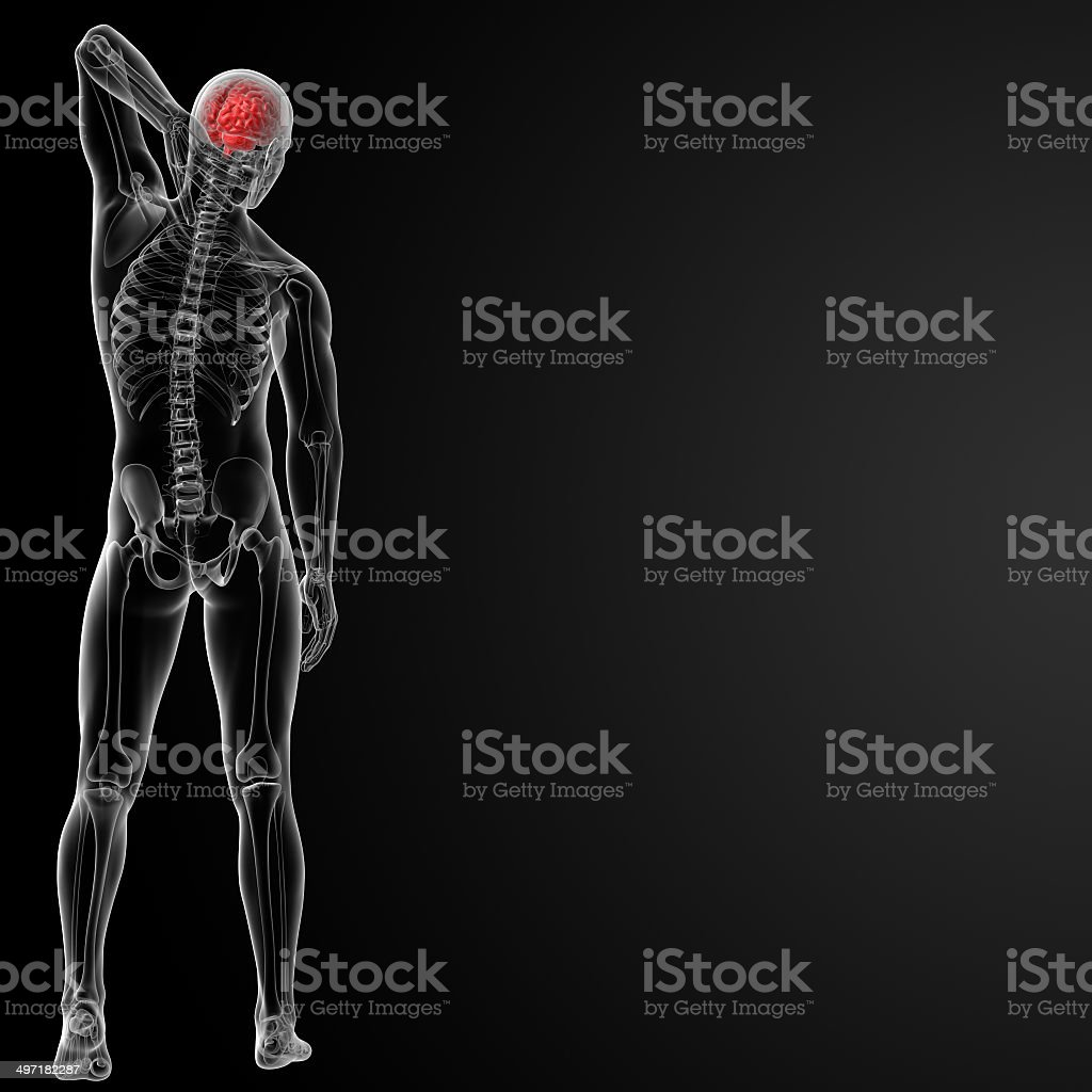 3d Render Of The Human Brain Anatomy Stock Photo & More Pictures of ...