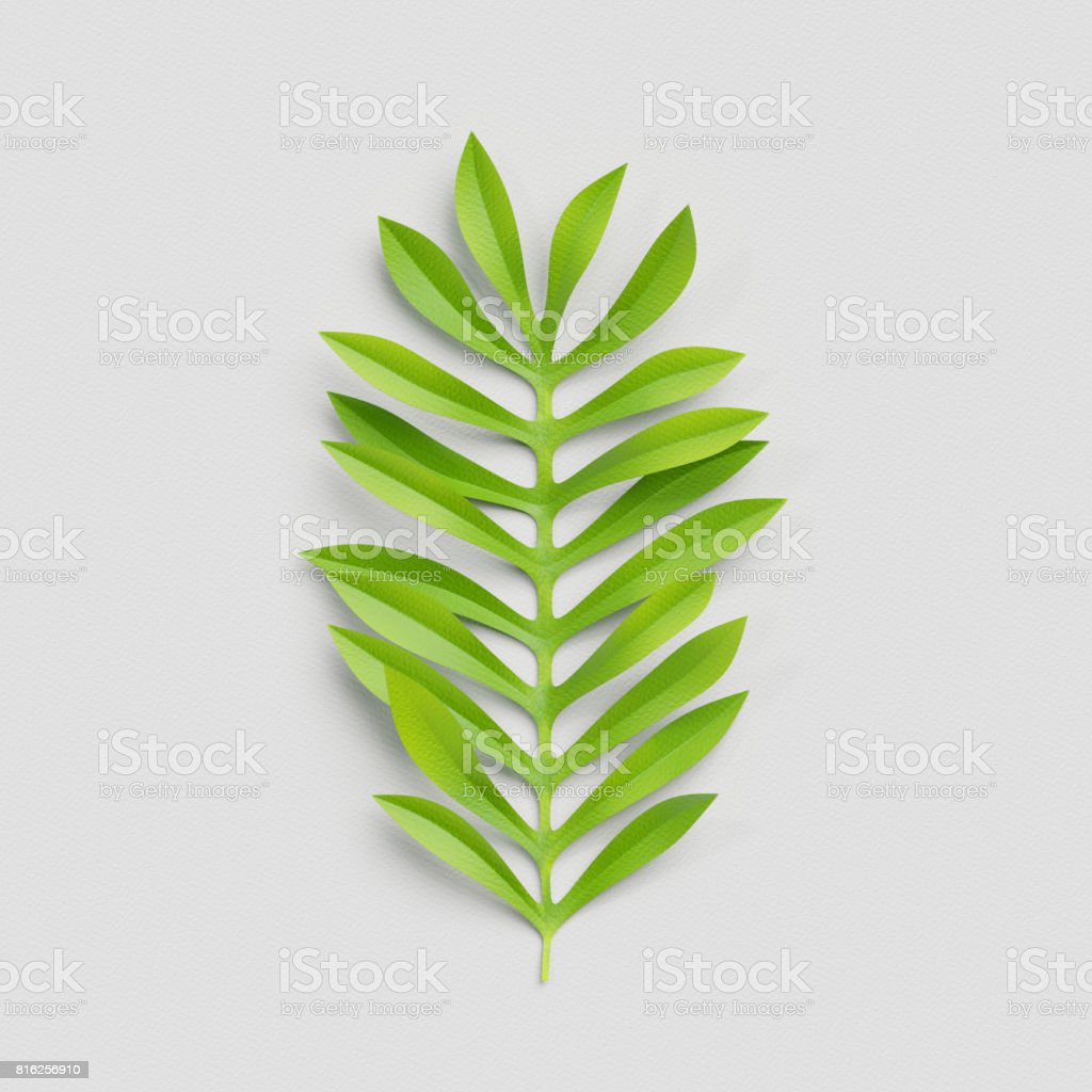 3d render, paper cut decor, green palm leaf, isolated botanical clip art element stock photo