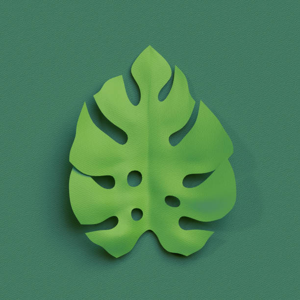 3d render, paper cut decor, green tropical leaf, isolated botanical clip art element stock photo