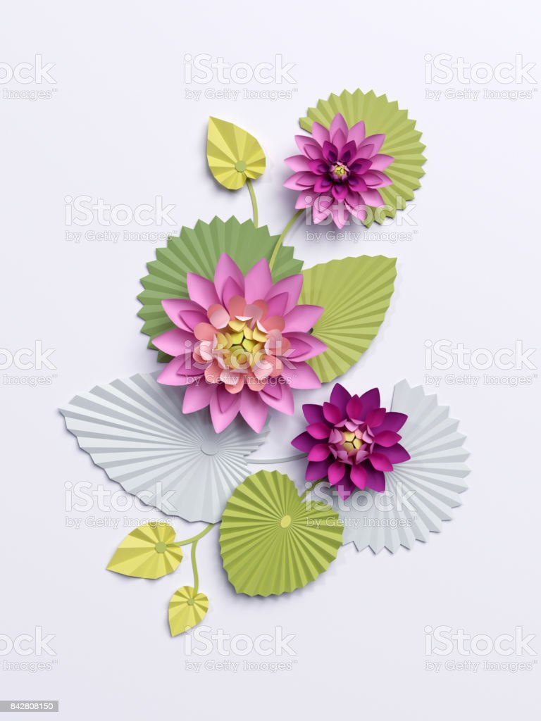 3d Render Paper Lotus Flowers Wall Decoration Pink Water Lily Green