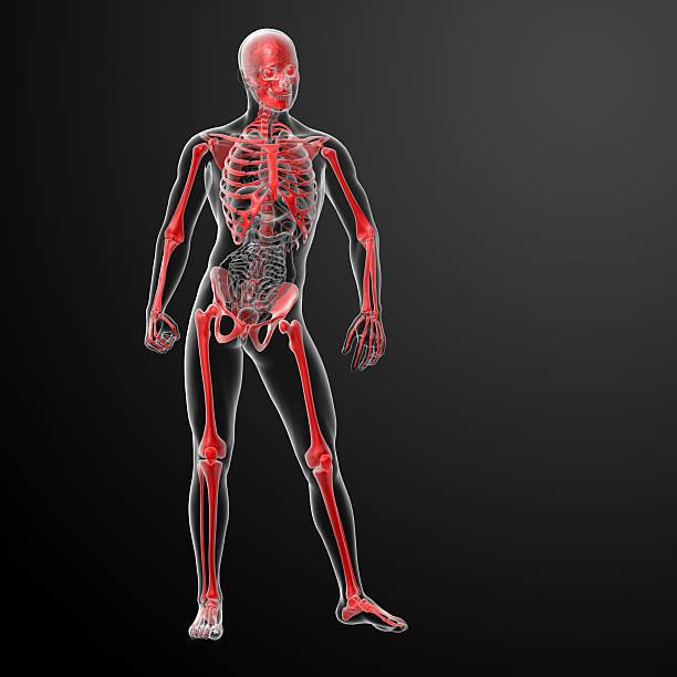 3 d render Skelett von Röntgenapparate in Rot – Foto
