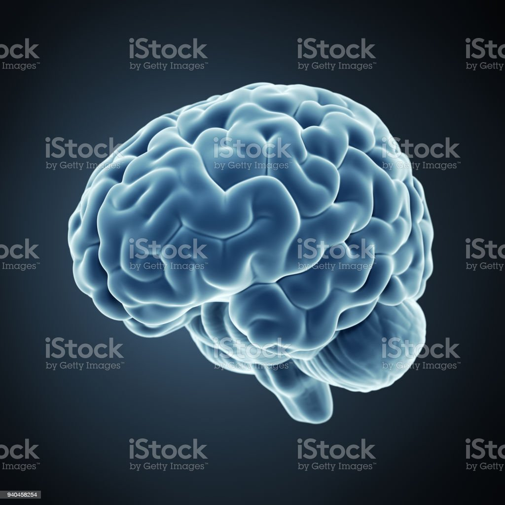 3d Rendered Human Brain Stock Photo More Pictures Of Anatomy Istock