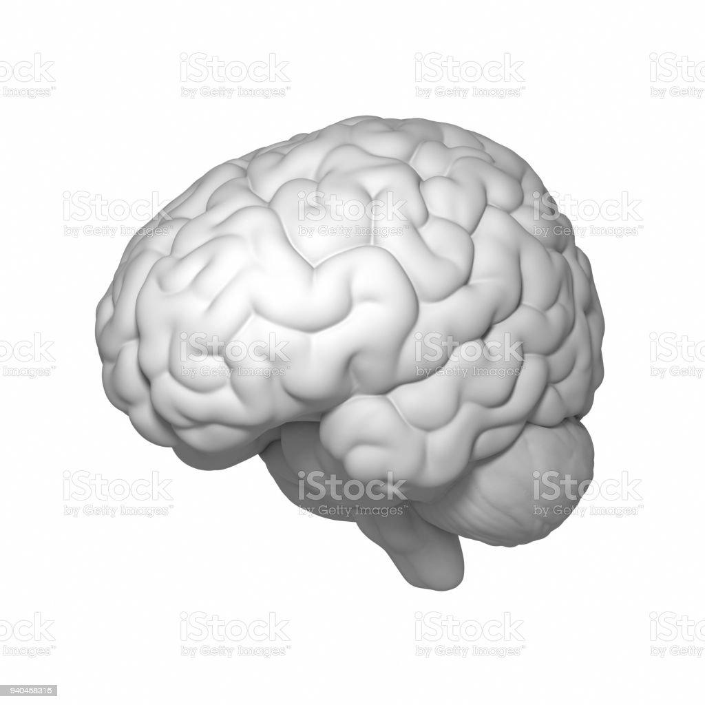 Großzügig 3d Kopf Anatomie Ideen - Menschliche Anatomie Bilder ...
