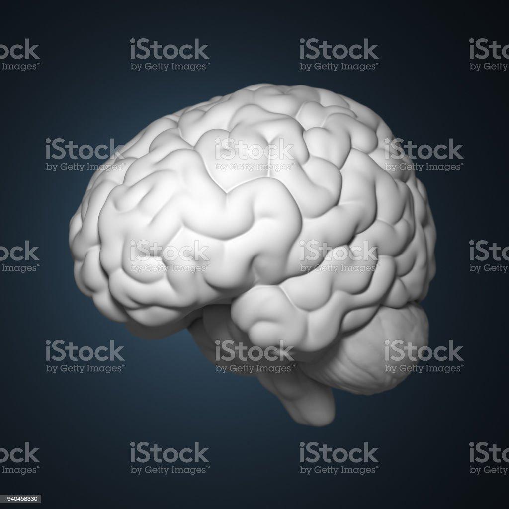 3d Gerenderten Menschliche Gehirn Stock-Fotografie und mehr Bilder ...