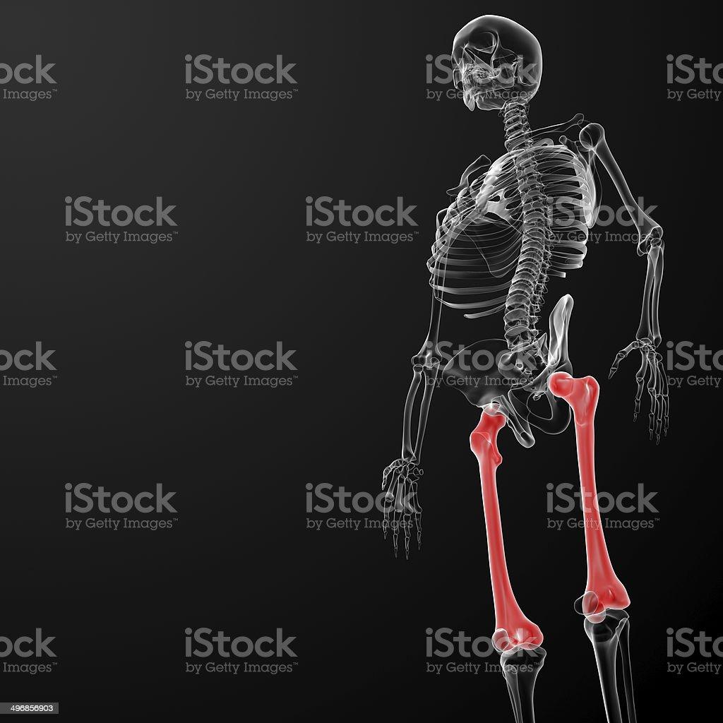 3d rendered illustration - femur bone royalty-free stock photo