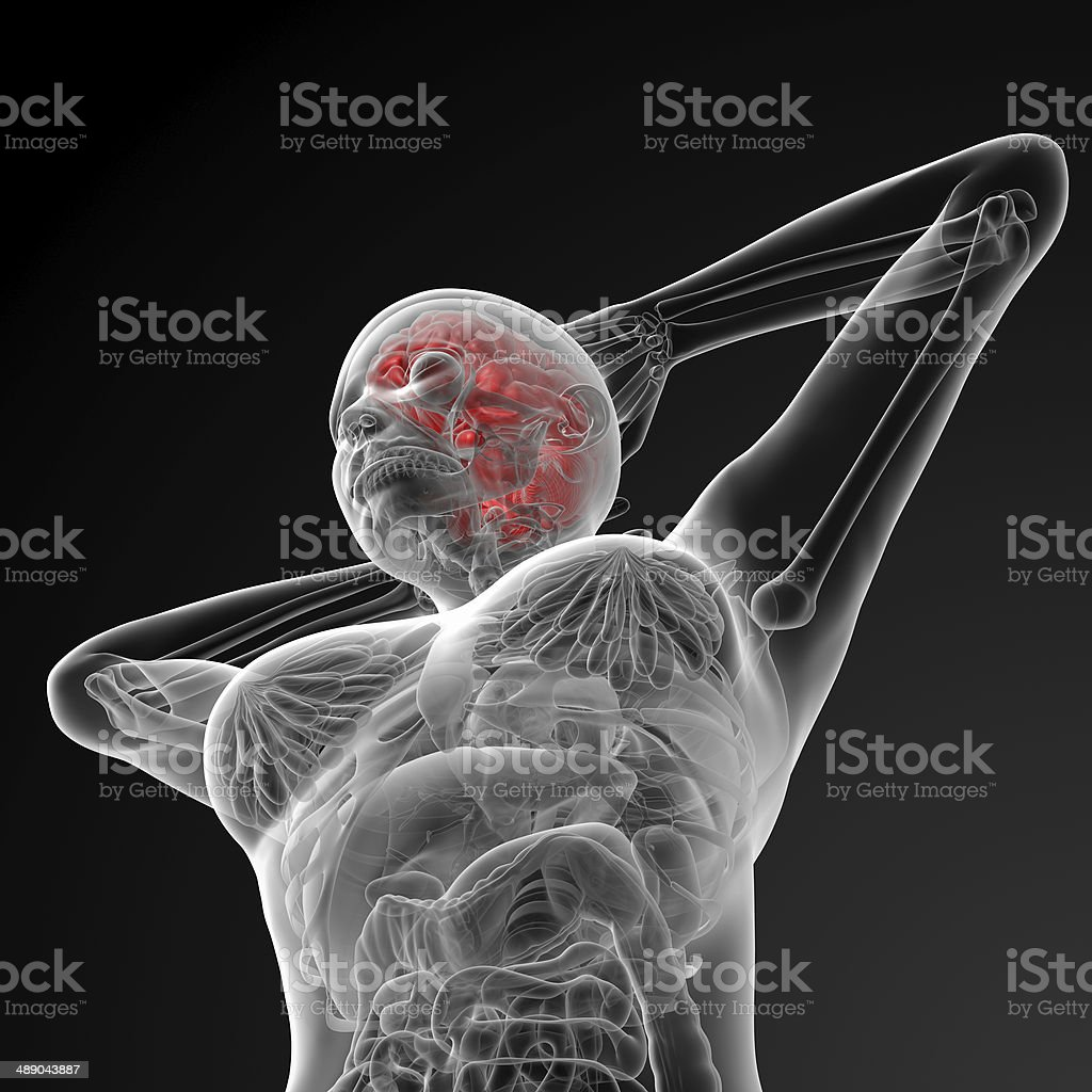 3d rendered illustration of the female brain bottom view stock photo 3d rendered illustration of the female brain bottom view royalty free stock photo ccuart Gallery