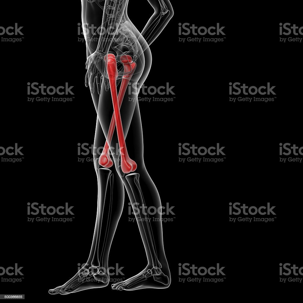 3d rendered illustration of the female femur bone royalty-free stock photo