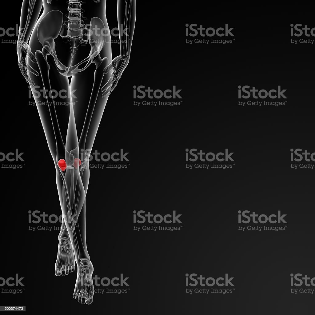 3d rendered illustration of the female patella bone royalty-free stock photo