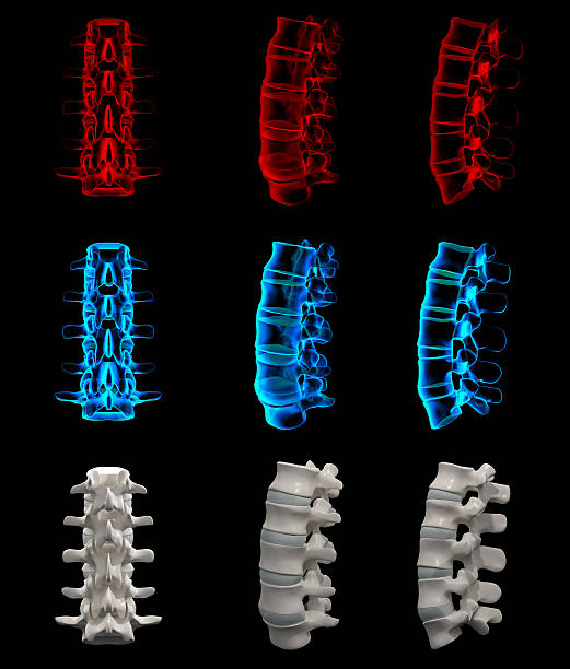 3 d illustration der Lendenwirbelsäule aus – Foto