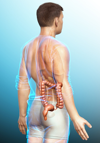 3d Rendered Medically Accurate Illustration Of Male Large