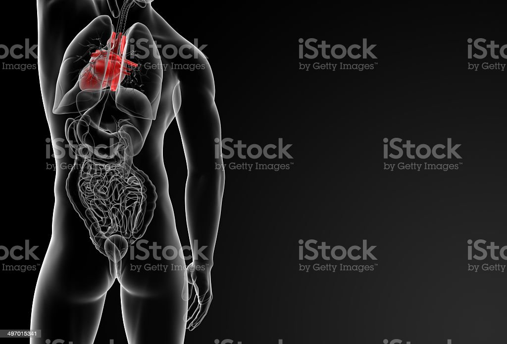 3d rendered of the human heart royalty-free stock photo