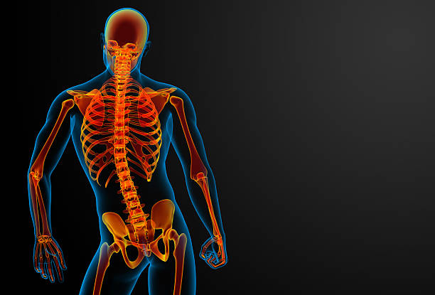 3 d aus roten Skelett-Ansicht der Rückseite – Foto