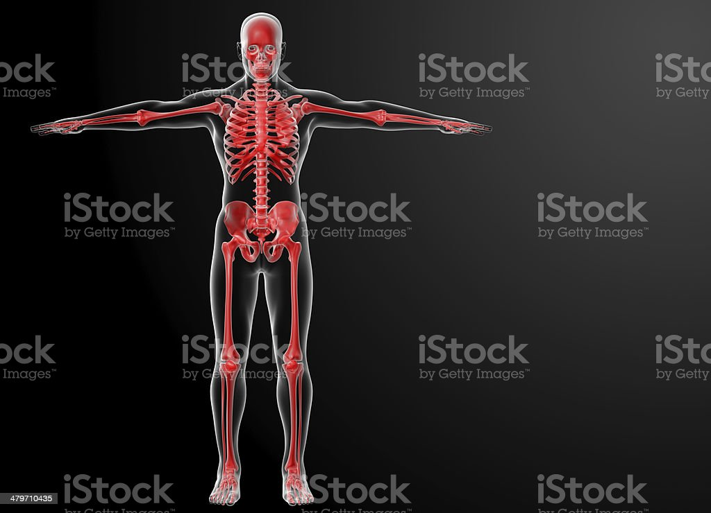 3d rendered red skeleton - front view stock photo