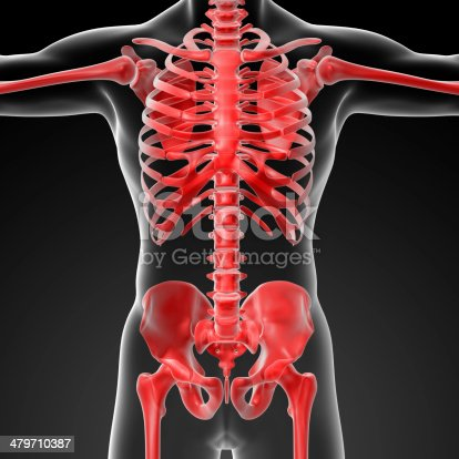 496193187 istock photo 3d rendered skeleton - close up front view 479710387