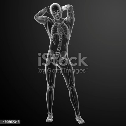 496193187 istock photo 3d rendered skeleton - front view 479662345
