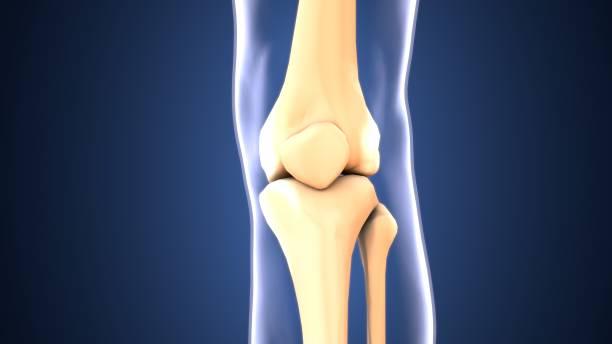 3d renderer illustration. mänskliga knä ben skelettet. - knäskål bildbanksfoton och bilder