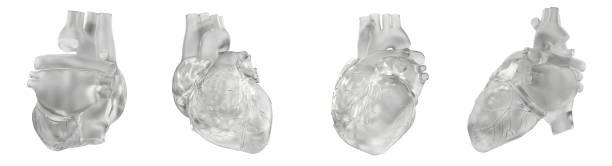 3D-Rendering-Illustration des Herzens – Foto