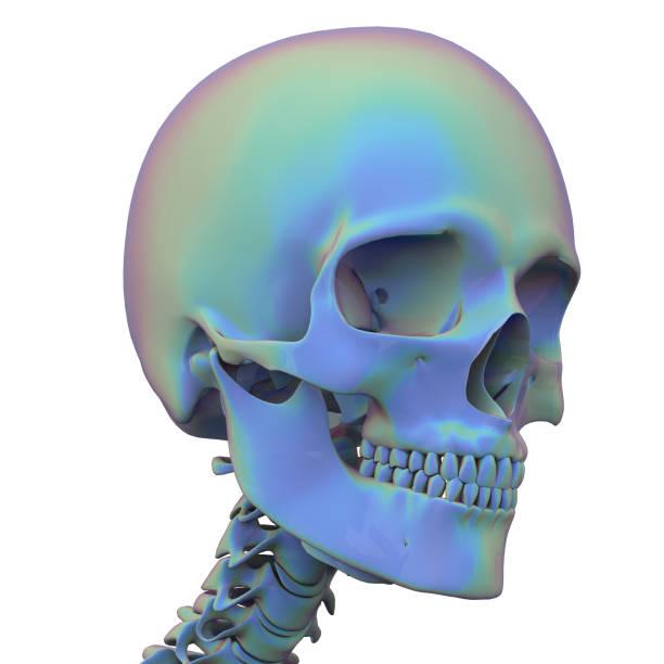 3D-Rening-Illustration der Schädelanatomie – Foto