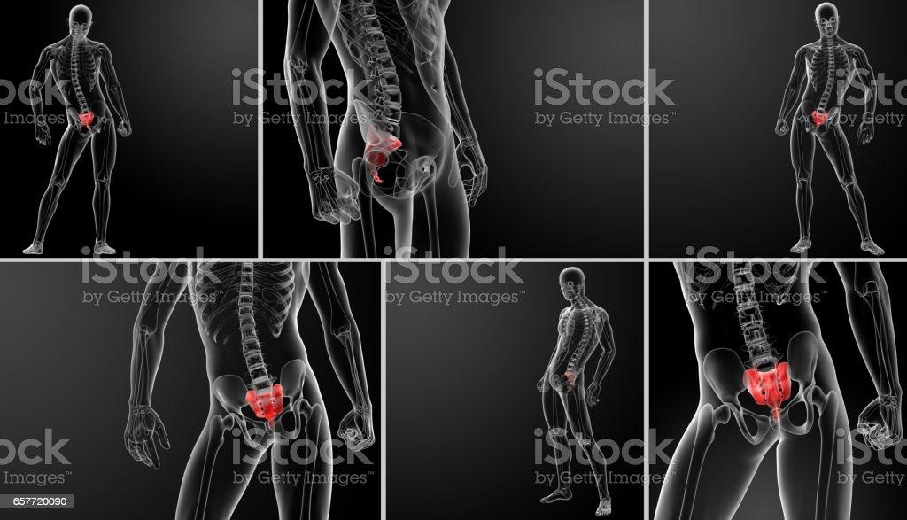 3d rendering illustration sacrum bone stock photo