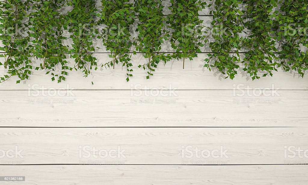 3d rendering ivy vegetation on white wooden wall stock photo