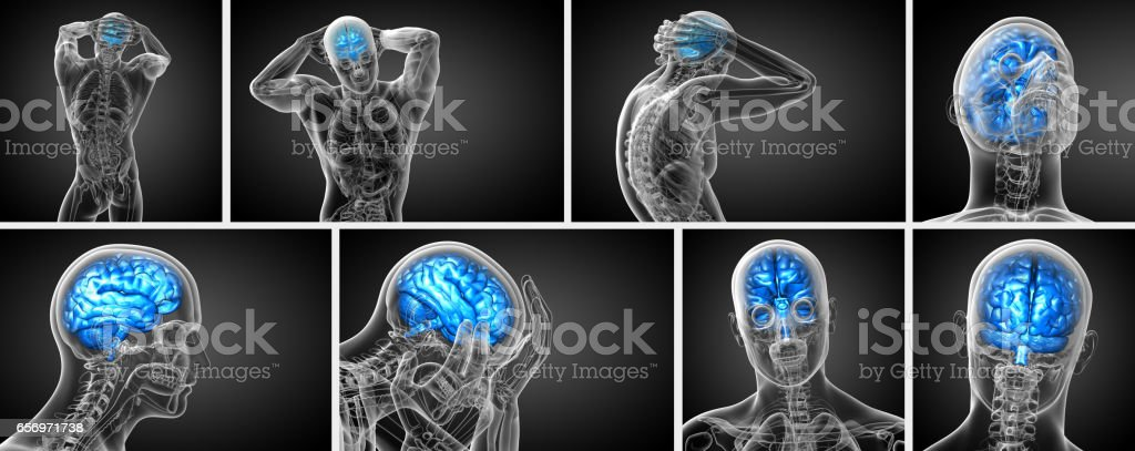 3d rendering medical illustration of the brain  - back view stock photo