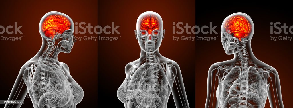 3d rendering medical illustration of the human brain stock photo