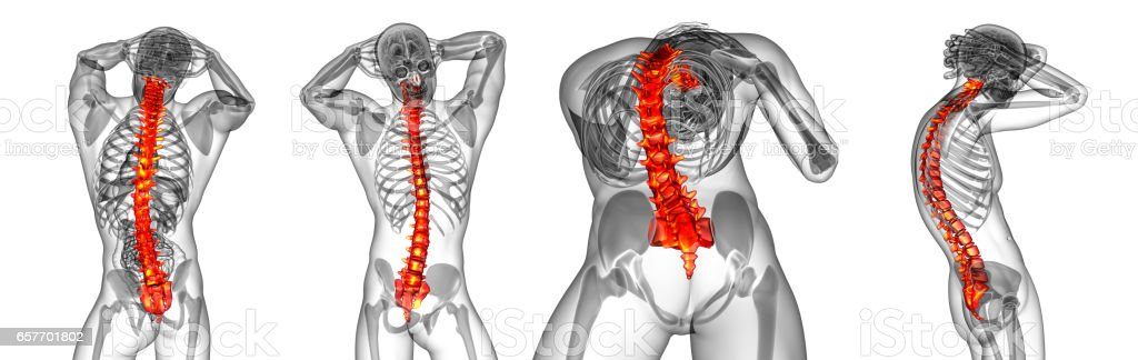 3d Rendering Medical Illustration Of The Human Spine Stock Photo