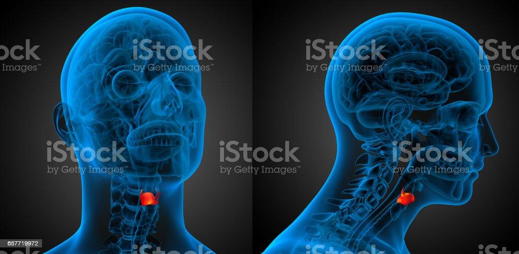 3d Rendering Medical Illustration Of The Larynx - Fotografía de ...