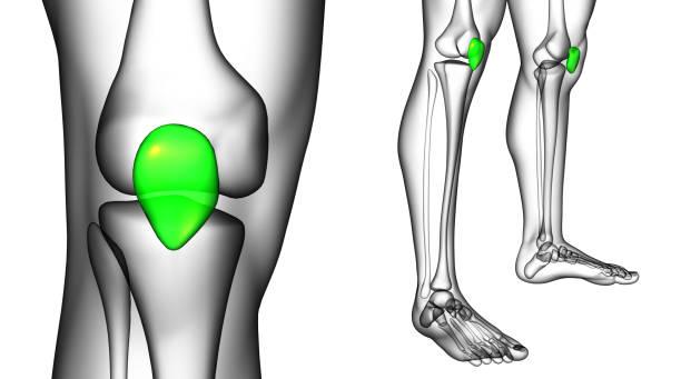 3d rendering medicinsk illustration av knäskålen ben - knäskål bildbanksfoton och bilder