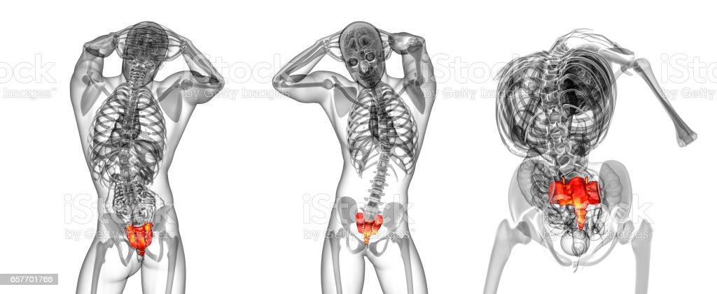 3d rendering medical illustration of the sacrum bone stock photo