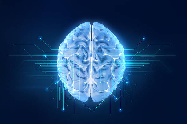 3d rendering of human  brain on technology background - cerveau humain photos et images de collection