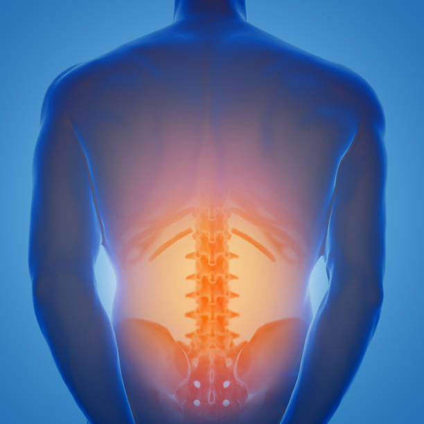 3d rendering of human male lower back with pain zone - low section stock photos and pictures