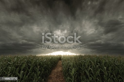 istock 3d Rendering of pathway in the middle of green cornfield in front of dramatic sky. Selective focus 1169823770