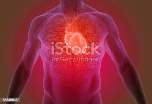 istock 3d rendering of the human heart anatomy 653398362