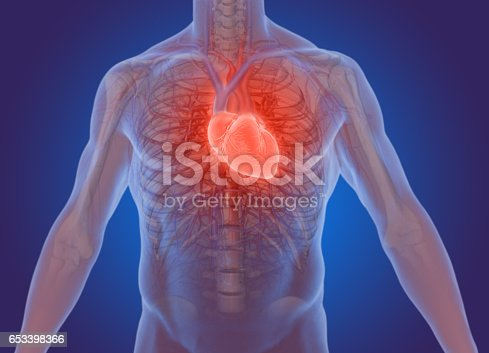 istock 3d rendering of the human heart anatomy 653398366