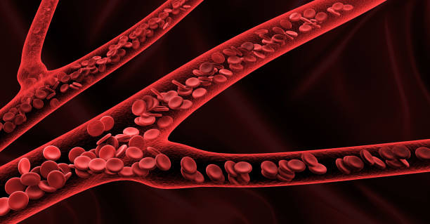 3d rendering red blood cells in vein stock photo