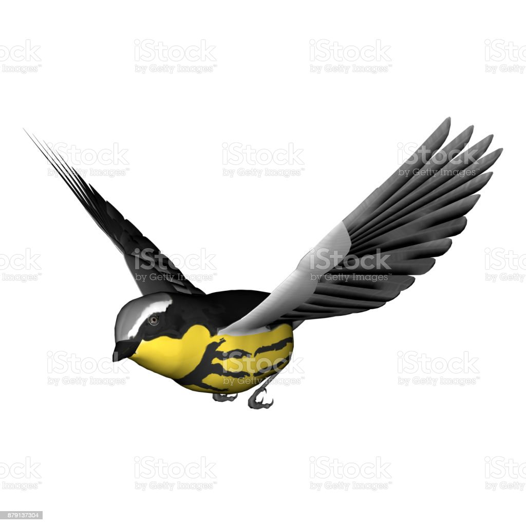 3d rendering songbird on white stock photo