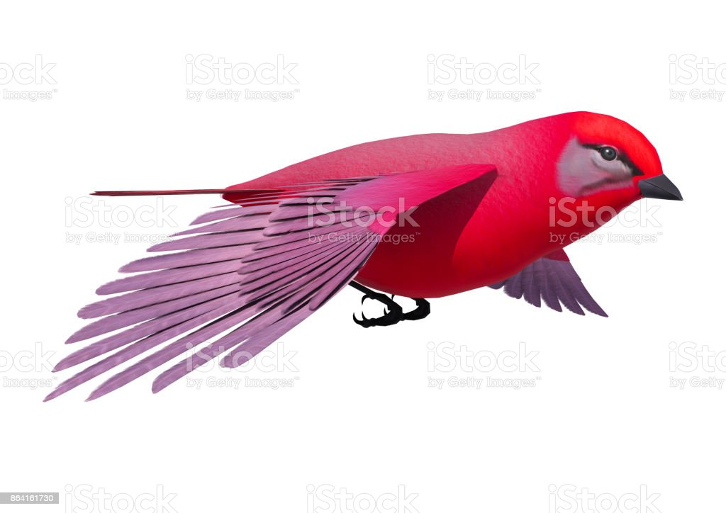 3d rendering songbird tanager on white royalty-free stock photo
