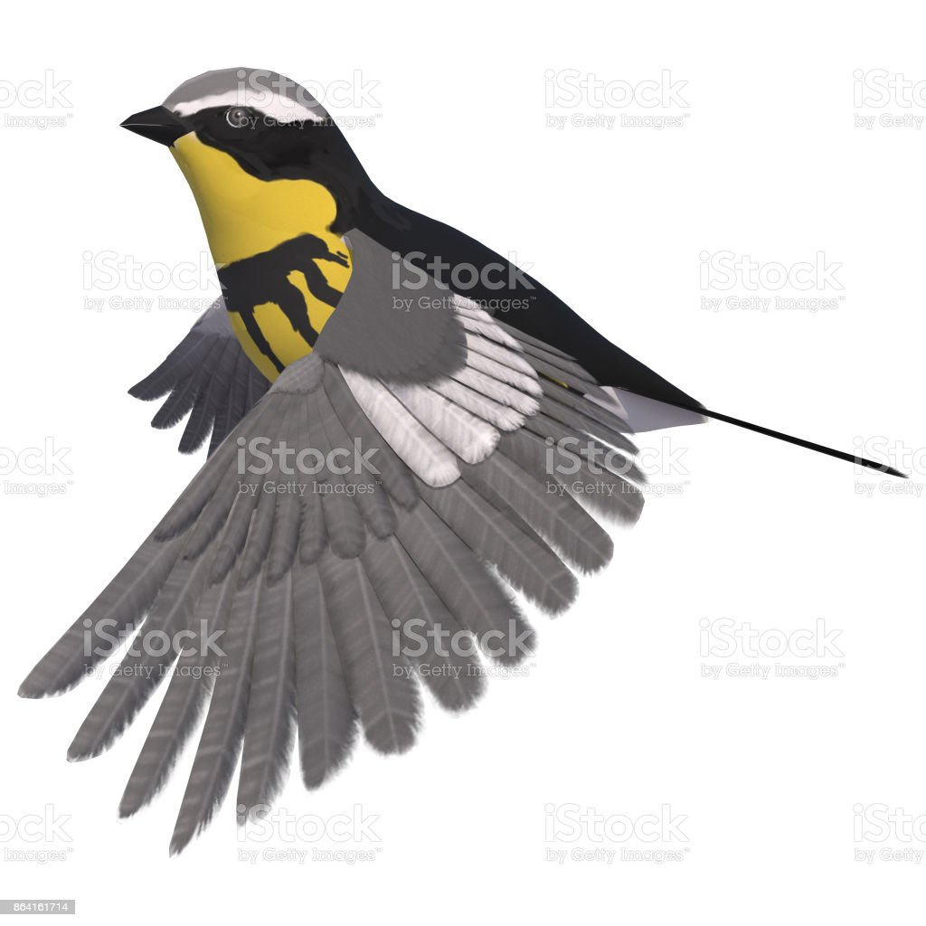 3d rendering songbird warbler on white royalty-free stock photo