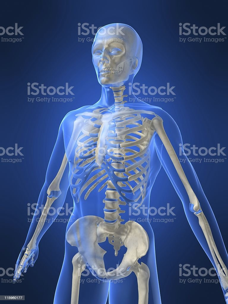3d skeleton royalty-free stock photo
