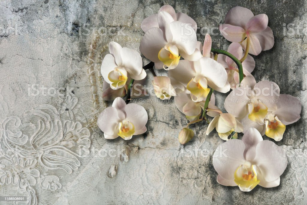 3d wallpaper, bouquet of orchids on lace and concrete wall textured....