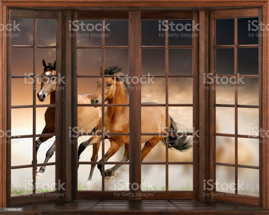 3d wallpaper horses running 3d window view decal wall sticker picture id1159599463