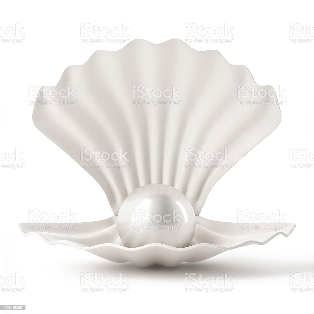 3d White Shell with pearl isolated on white background stock photo