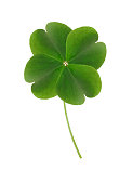 Lucky 4-leaf clover on white background