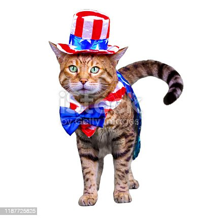 490776989 istock photo 4th of July Cat 1187725825
