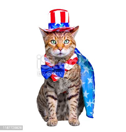 490776989 istock photo 4th of July Cat 1187725826