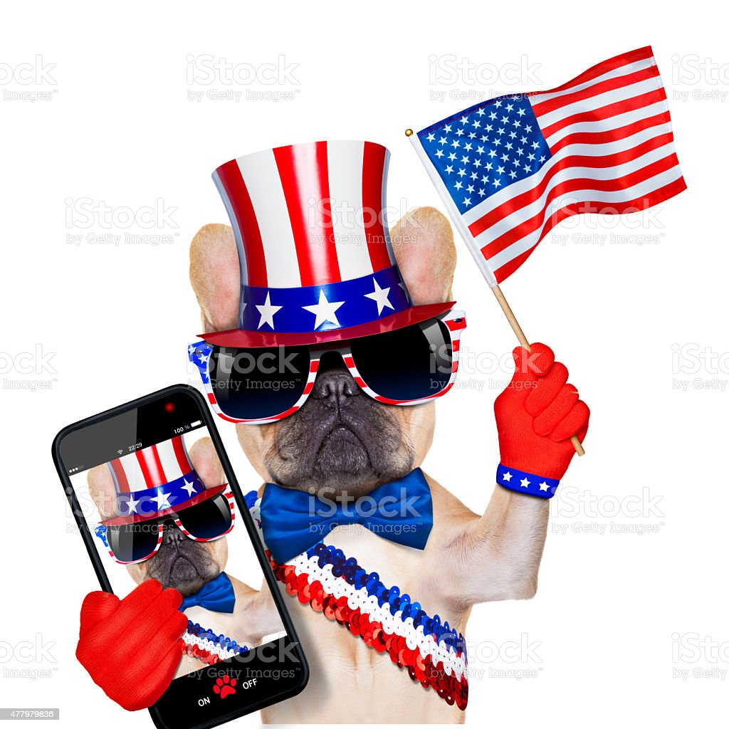 4th oh july dog stock photo