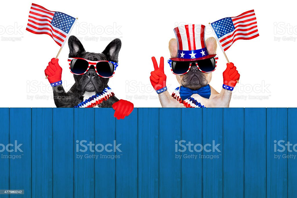 4th oh july row of dogs stock photo