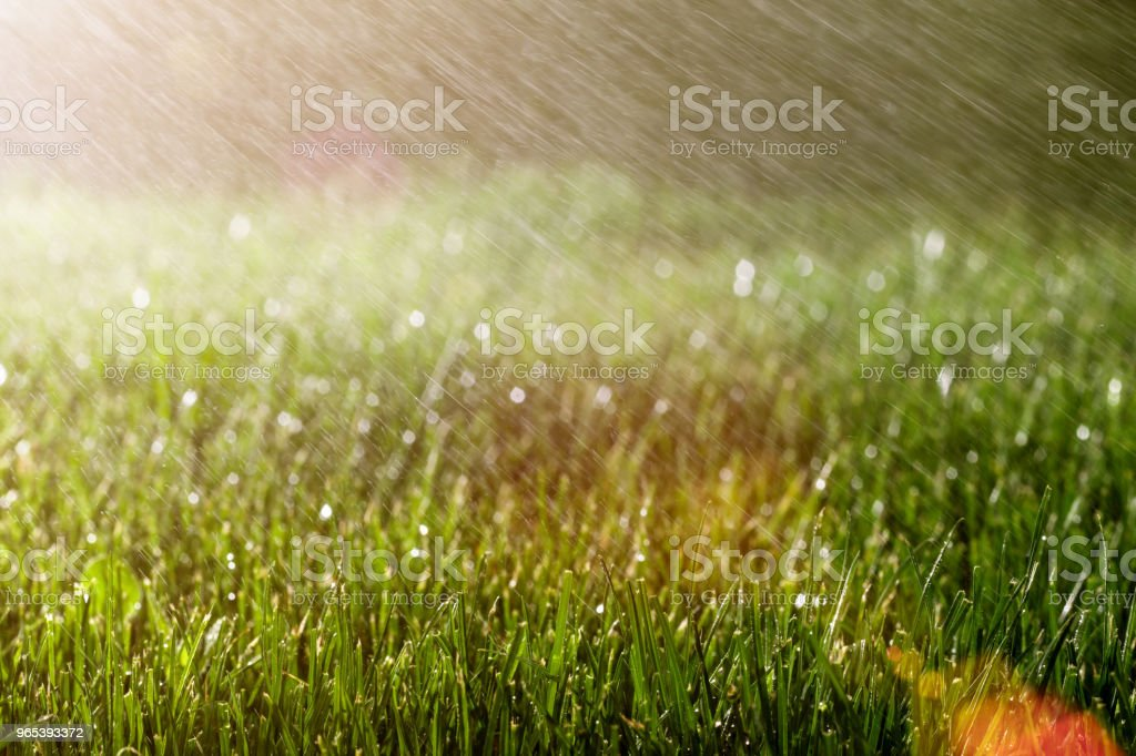 a background grass royalty-free stock photo
